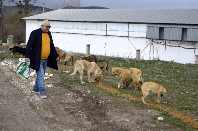 Tavşanlı'da sokak köpeklerini kısırlaştırma alanı yapılıyor