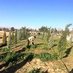 Karaman Belediyesi mezarlıkları dezenfekte ediyor