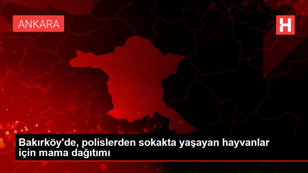 Bakırköy'de, polislerden sokakta yaşayan hayvanlar için mama dağıtımı