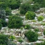 Mersin'de dolu tarım arazilerine zarar verdi