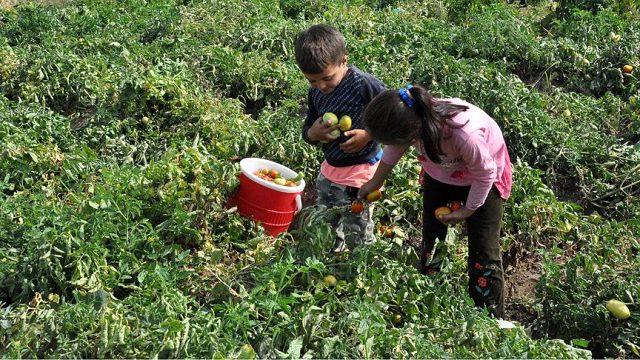 Araştırma gösterdi: Türkiye'de 5-17 yaş grubunda çalışan çocuk sayısı 720 bin