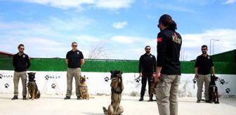Van Emniyet Müdürlüğü: Bu kez 'Evde kal' çağrısı, dedektör köpeklerden geldi