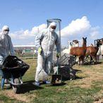 Kayseri Hayvanat Bahçesinin sakinlerine koronavirüs tedbiri
