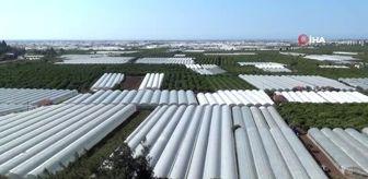- Antalya'da çitçi üretime ara vermedi