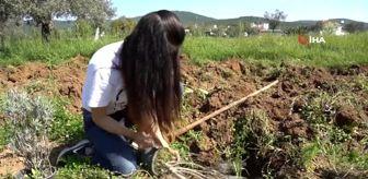 Genç kadın girişimci ailesinin boş arazisini lavanta bahçesine çevirdi