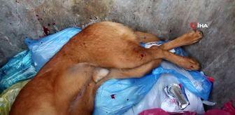 Böyle vahşet görülmedi...Köpeği tüfek ile vurup can çekişirken çöpe attı