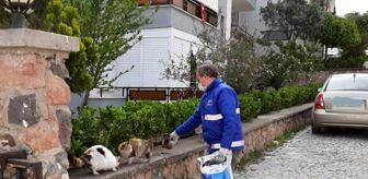 Cunda Adası: Cunda'nın sembollerinden kediler ve sokak hayvanları unutulmadı