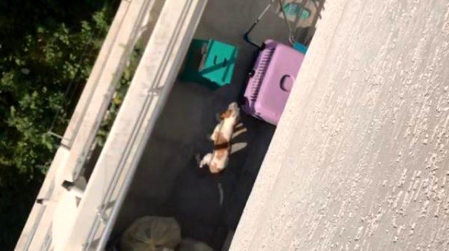 Üniversiteli komşusunun köpeğine kötü davranışını görüntüledi
