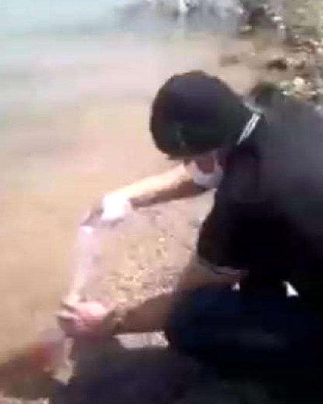 Göle çok sayıda Japon balığı bırakan esrarengiz Amerikalı, Konya'yı karıştırdı