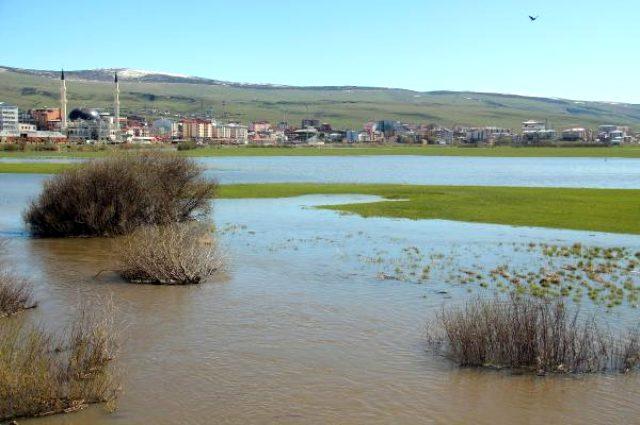 Ardahan'da Kura Nehri taştı, Ardahan Ovası göle göndü