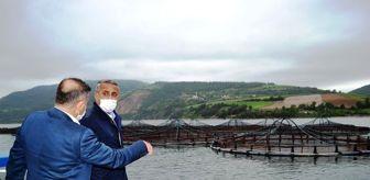 Derbent: Samsun'da balık çiftliklerinde yılda 16 bin tondan fazla balık üretiliyor