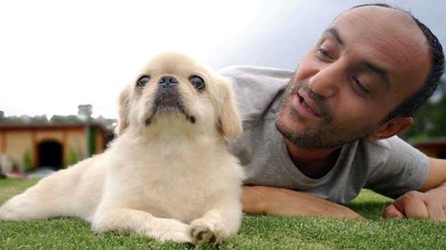 Arkadaşları Ersin Korkut'a Mess'e benzeyen köpek aldı