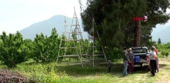 Hadim: DENİZLİ 'Cambaz'la kırmızı altının hasadı başladı