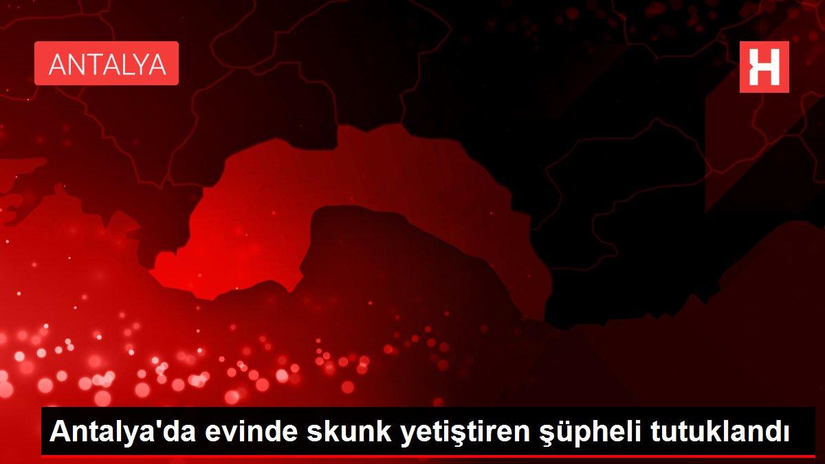 Antalya'da evinde skunk yetiştiren şüpheli tutuklandı