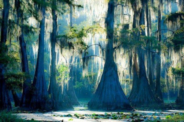 Olağanüstü görünüme sahip ağaçlar! Dünyanın en ilginç ağaçları