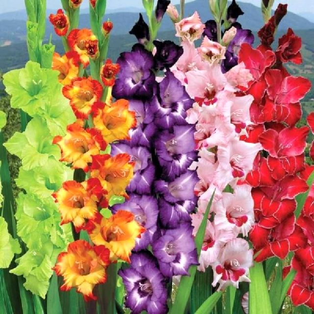 Türkiye'de yetişen en nadide çiçekler!
