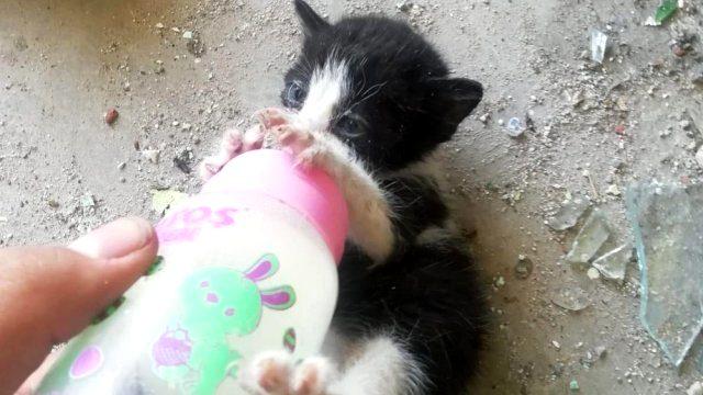 Biberonla beslenen yavru kediler başı kesilmiş halde bulundu