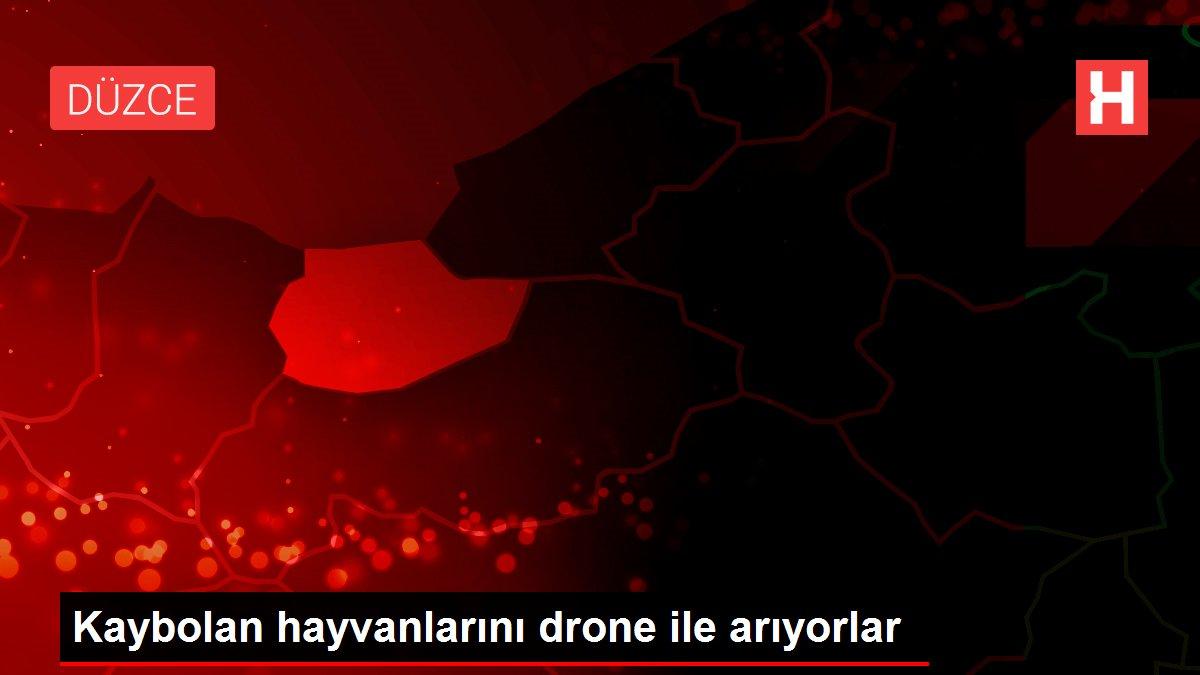 Kaybolan hayvanlarını drone ile arıyorlar