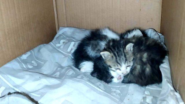 Öğrenciler biberonla besledikleri yavru kedileri başı kesilmiş halde buldu