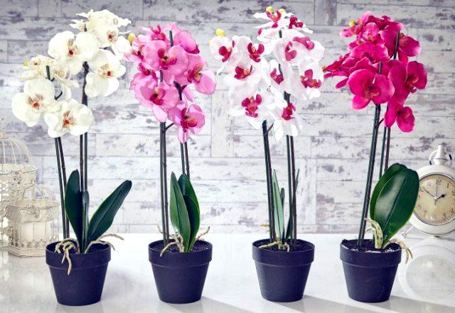 Orkide bakımı asıl yapılır?