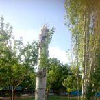 Kahramanmaraş'ta oluşan hortum elektrik direği ve ağaçları devirdi