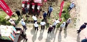 Yerli ve milli mısır tohumu yeniden toprakla buluştu