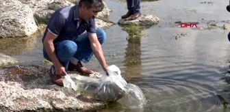 Bitlis'te 2 ayrı göle 70 bin yavru balık bırakıldı