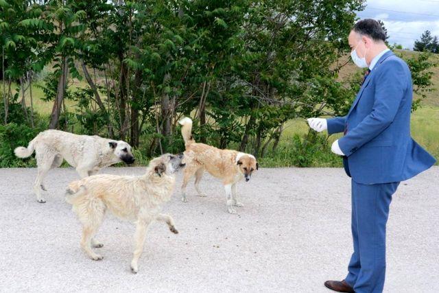 Kırıkkale'de sokak hayvanları beslendi