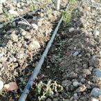 Seben'de bazı meyve sebzeler zirai dondan etkilendi
