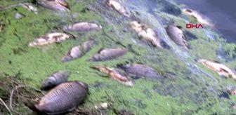 BOLU Baraj göletinde sazan balığı ölümleri araştırılıyor