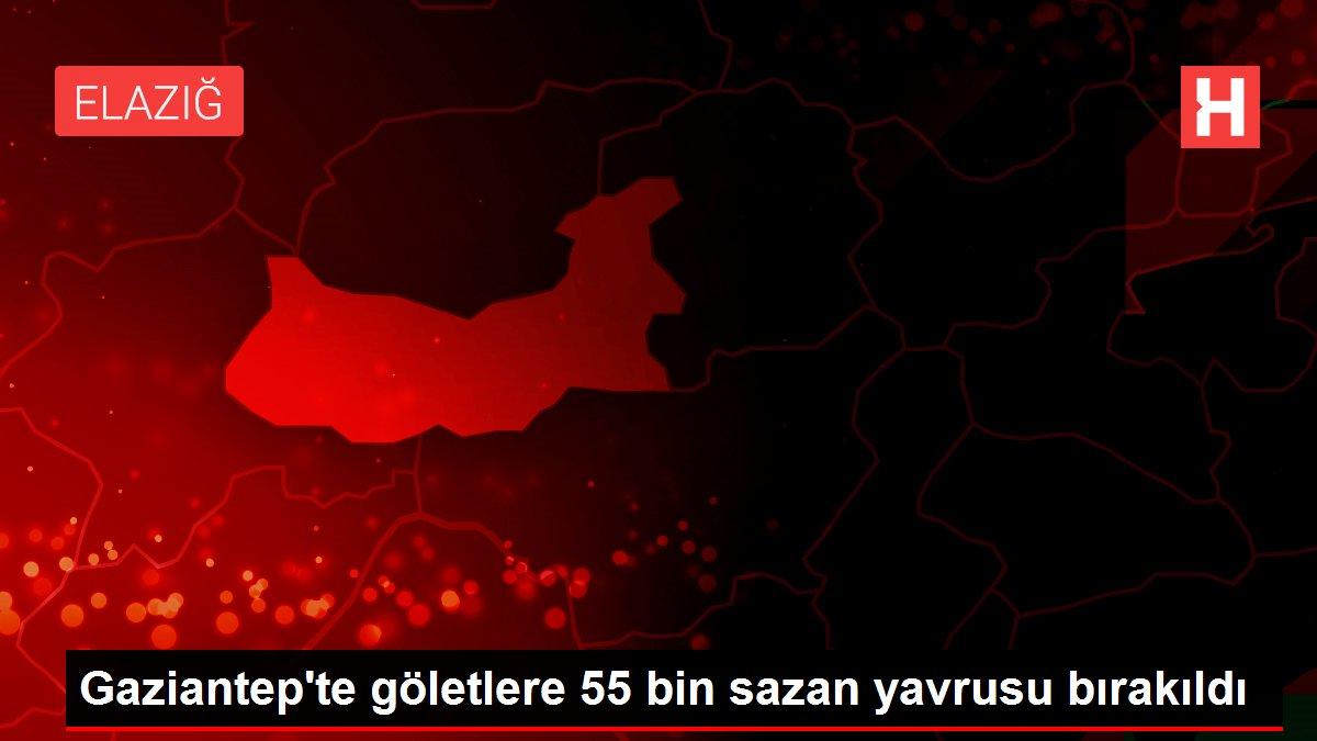 Gaziantep'te göletlere 55 bin sazan yavrusu bırakıldı
