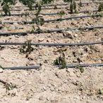 Tomarza'da tarım ürünleri soğuktan etkilendi