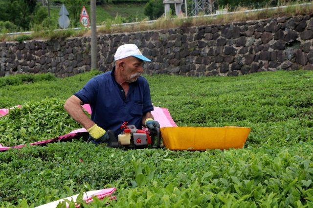 Çay toplayanlar, ürünlerini kota koyarak aldığı için ÇAYKUR'a tepkili