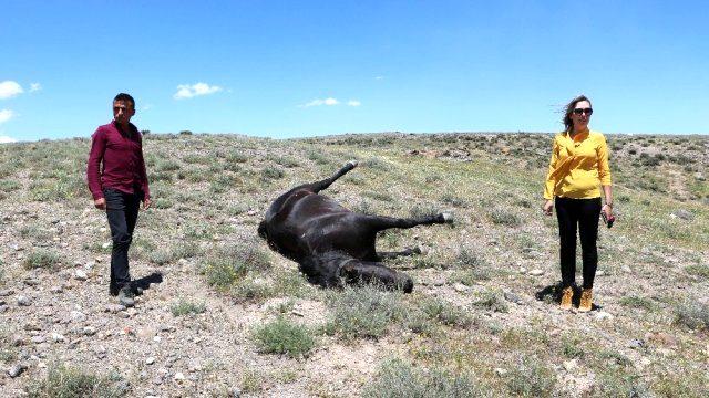 'Kovboy Muhtar' Tuğba Somkaya'nın atını vurdular