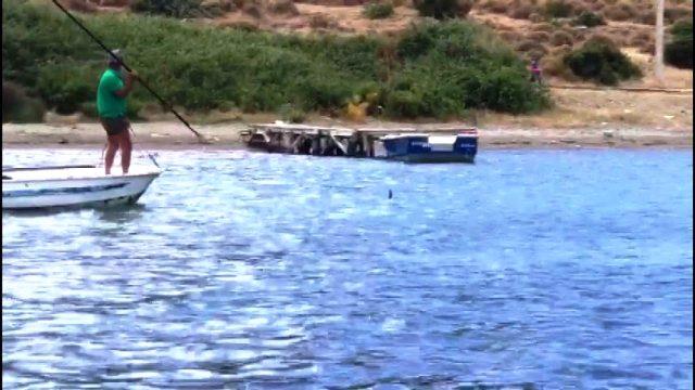 Kıyıya gelen köpek balığının mızrakla defalarca vurularak katledilişi kamerada