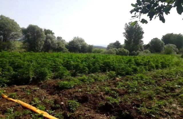 Diyarbakır'daki operasyonda rekor düzeyde uyuşturucu ele geçirildi