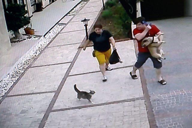 Anbean görüntülendi! Küçücük kedi, köpekli çifte korku dolu anlar ...