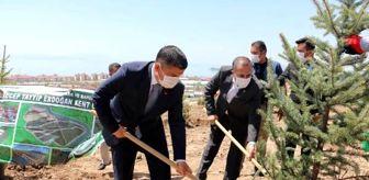 Erciş: Erciş'te Kent Ormanı'na bin ladin ağacı fidanı dikildi