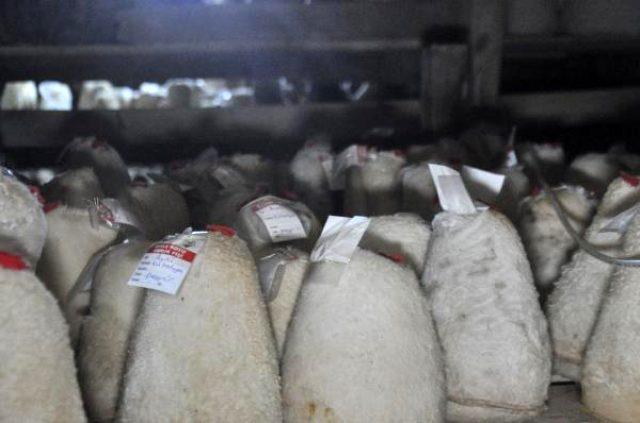 Fransızların tahtını elinden aldı! Dünyanın en lezzetlisi Karaman'da üretiliyor