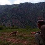 Hakkari'de arıcılar, bölgeye gelen tilkiyi elleriyle besliyor
