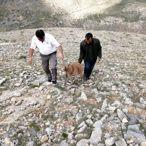 Kayseri'de gebe ve hasta halde bulunan yaban keçisi koruma altına alındı