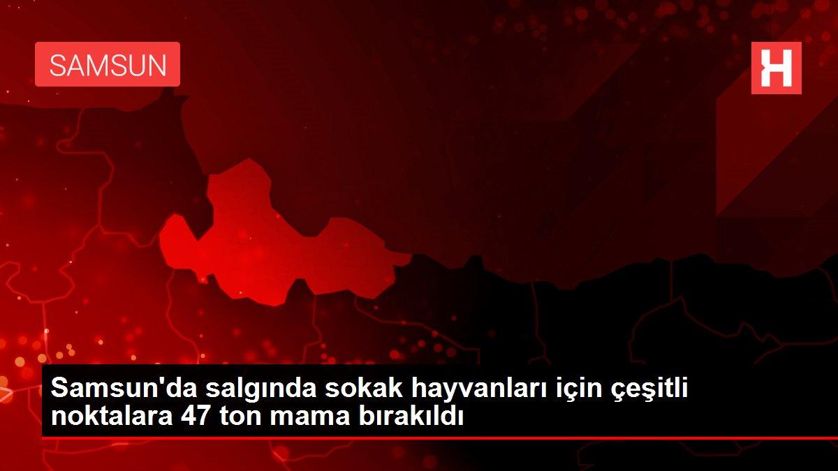Samsun'da salgında sokak hayvanları için çeşitli noktalara 47 ton mama bırakıldı