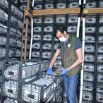 Kayseri'den Kazakistan ve KKTC'ye çilek fidesi ihracatı