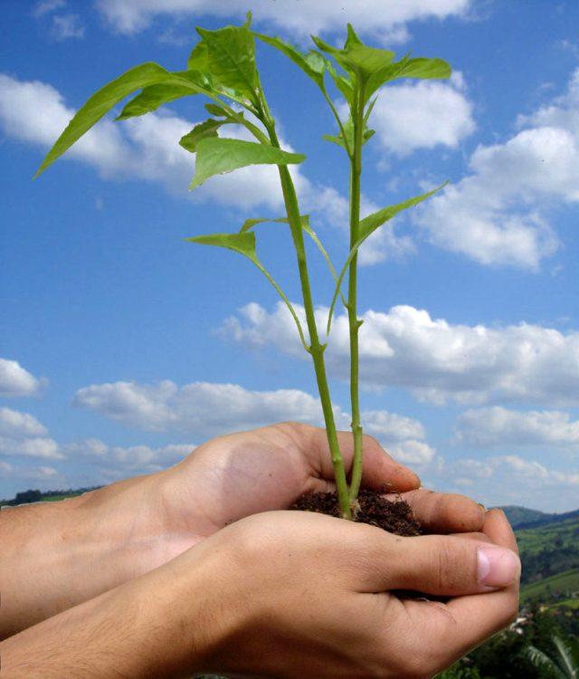 Dünya çevre günü nedir? Dünya çevre günü neden kutlanıyor? Dünya çevre günü hakkında merak edilenler! 5 Haziran Dünya Çevre Günü!