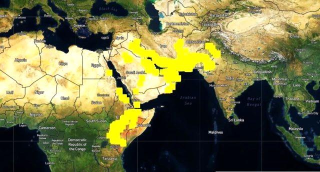 Çekirge istilalarının temel sebebi iklim değişikliği ve aşırı yağışlar