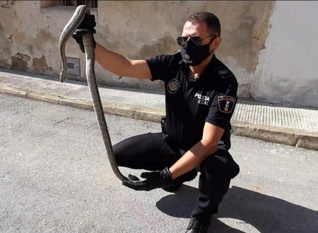 İspanya'da görülen 2 metrelik dev yılan panik yarattı