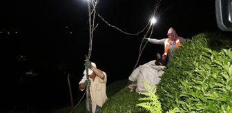 Son Dakika: Sıcak ve nemden bunalan Rizeliler çareyi çayı akşam toplamakta buldu