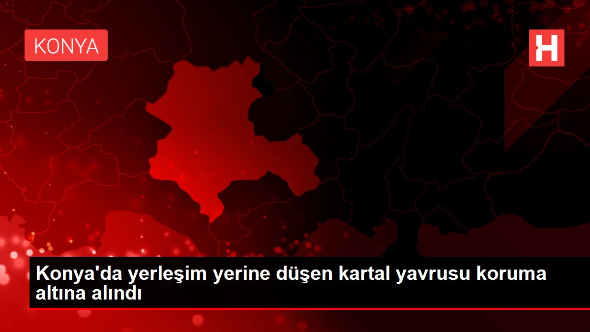 Konya'da yerleşim yerine düşen kartal yavrusu koruma altına alındı