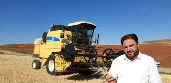 Sungurlu: Sungurlu TMO buğday alımına başlıyor