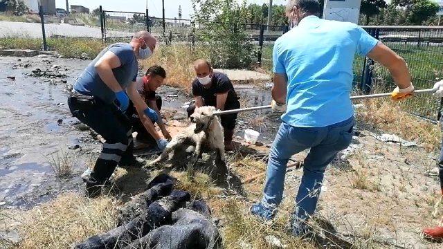 Boş araziye döktükleri ziftle hem çevre hem de köpek katili oldular